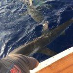 Photo of Hawaii Shark Encounters