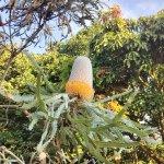 Photo of Kula Botanical Garden