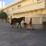 Palace horses walking through the courtyard early morning.