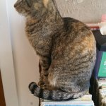 This is Tiger-Lily. All the cats are listed on the wall with their photos and names.