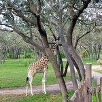 Photo de Disney's Animal Kingdom Villas - Kidani Village