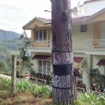 Pinewood Guest House Picture