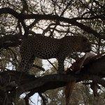 Brilliant Game Drive, Leopard Kill