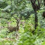 Spotted deer, during the Trek