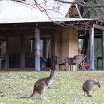 Kangaroos are so daily