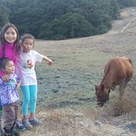 The girls were so excited to see cows