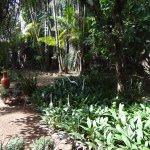 Photo of Pousada Palmeira Imperial