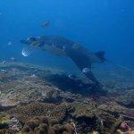 Foto de OK Divers Resort & Spa