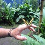 Foto de Spirogyra Butterfly Garden