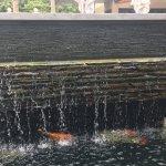 Amazing Koi fish pond