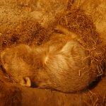 Photo de Shoalhaven Zoo