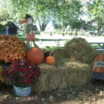 Picnic benches and fall decorations