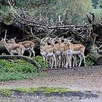 Foto de Beekse Bergen Safari Park