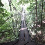Tree Treck/Zip Lining
