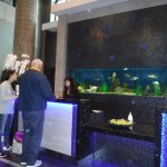 Checking in at the front desk there is an aquarium in the background!