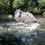 Dunsmuir Botanical Gardens, River Walk