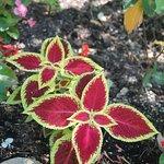 Dunsmuir Botanical Gardens, Flowers