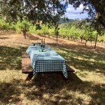 Picnic table in the vineyard