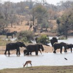 A day at Kruger National park