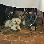 Dog friendly for outdoor dining