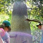 Baobab Tree on the brief nature walk