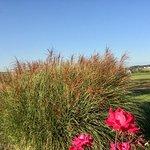 Amish farmland in the background