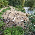 One of the duck areas