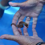 holding a seahorse