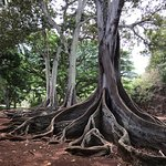 Trees from Jurassic Park