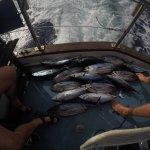Photo of Genuine Fishing in Tenerife