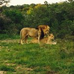 Foto de Sibuya Game Reserve: 4 -Star Luxury Tented Camps and Lodge