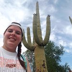 cacti along desert discovery trail