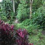 מלון ששוכן בג'ונגל
