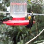 Humming birds feeding on the feeders in the humming bird garden