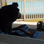 Dexter enjoying his own personal fan & that view - looking for crabs <3