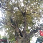 Güzel bir ağaç