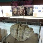 Foto van Phuket Seashell Museum