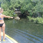 Turtles in the mangroves
