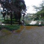 Laguna con 1 cisne