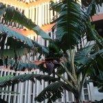 Annapurna Hotel Tenerife Photo