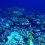 Photo de Diving Bluetribe Moofushi