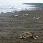 Nearby beach for Turtle Nesting