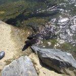 eels coming ashore