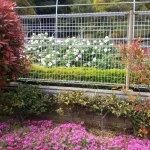 Handayama Botany Foto