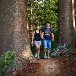 Norfolk Island National Park walking tracks