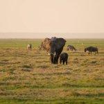 Tanzanian elephants