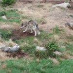 Foto de Wolves of Gueret