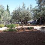 Photo de Garden of Gethsemane