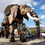 El elefante más grande del mundo!
