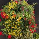 Beautiful Flower Baskets
